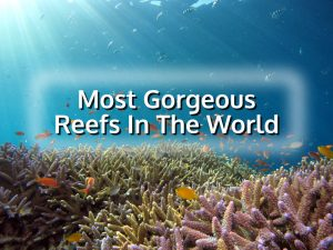 Most gorgeous reefs in the world Photo by Hiroko Yoshii on Unsplash