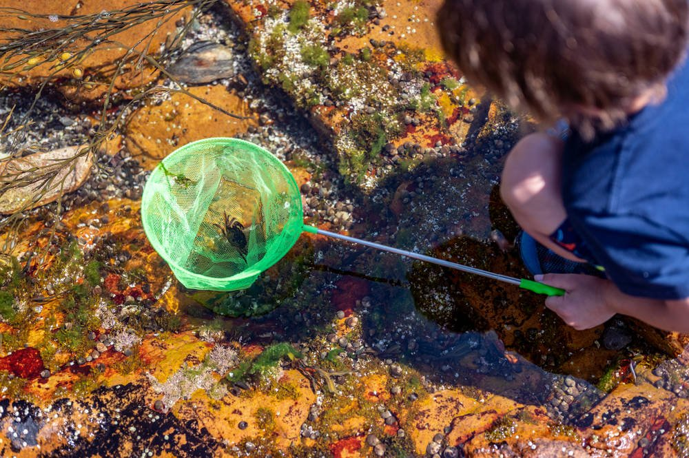 A child with a net catching a crab at the Acadia National Park
