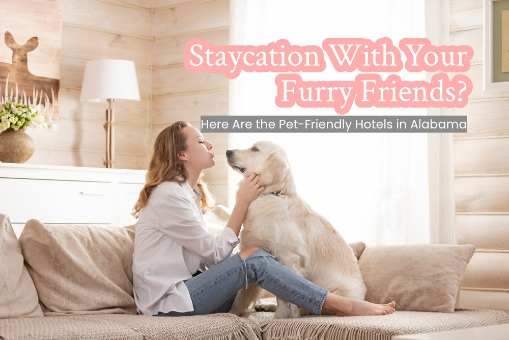 Staycation With Your Furry Friends?